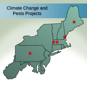 Climate Change and Pests Projects