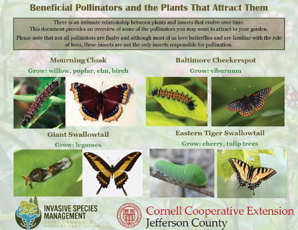 Beneficial Pollinators and the Plants That Attract Them