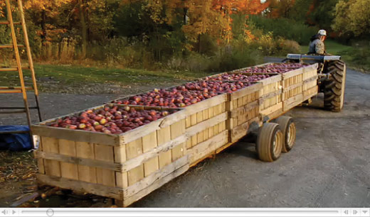 Crates of apples