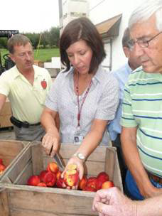 Tracy Leskey examining BMSB injury to fruit at a meeting with growers