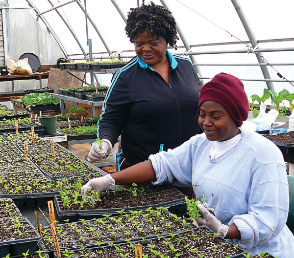 Trainees learn seedling production