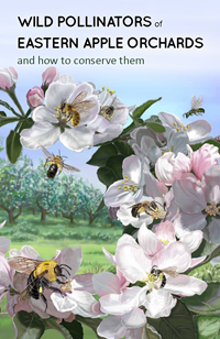 Wild Pollinators of Eastern Apple Orchards and How to Conserve Them