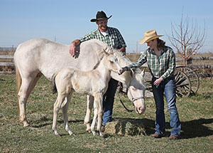 A man and woman wearing Stetson hats take care of white horses.