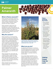 Palmer Amaranth Factsheet