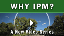 Why IPM?