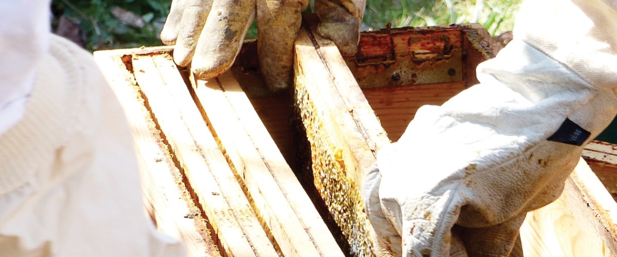 Cornell Offers Master Beekeeping Certificate