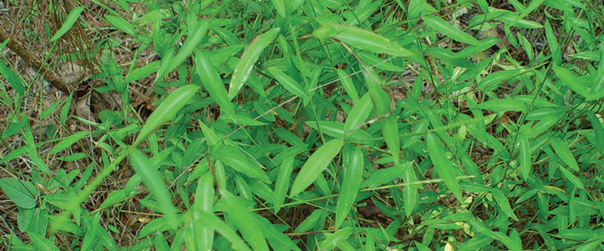 Scientist sees weeds as indicators of climate change