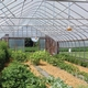All About Pests in High Tunnels for the Beginning Farmer
