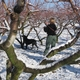 Opal detects BMSB in the snowy orchard
